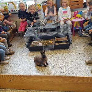 Thema 'Dieren' in klas E2