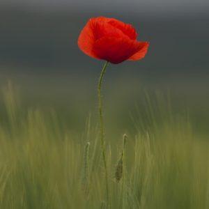 2A herdenkt de oorlog